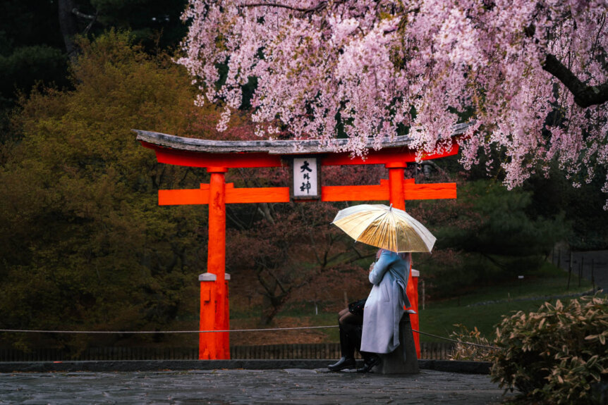 a rainy day at Brooklyn Botanic Garden with cherry blossoms at Japanese Hill And Pond Garden