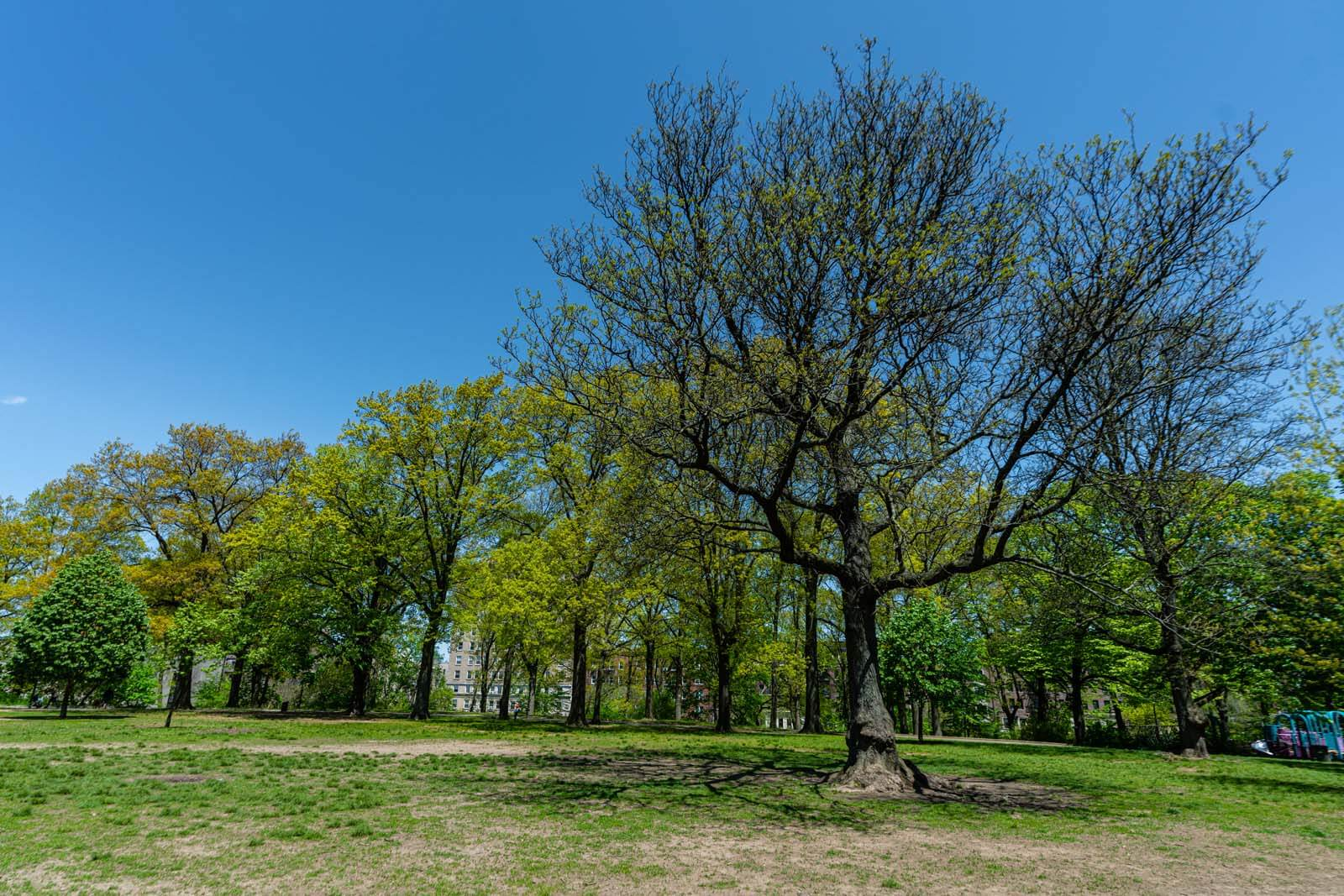 Mount Prospect Park in Brooklyn