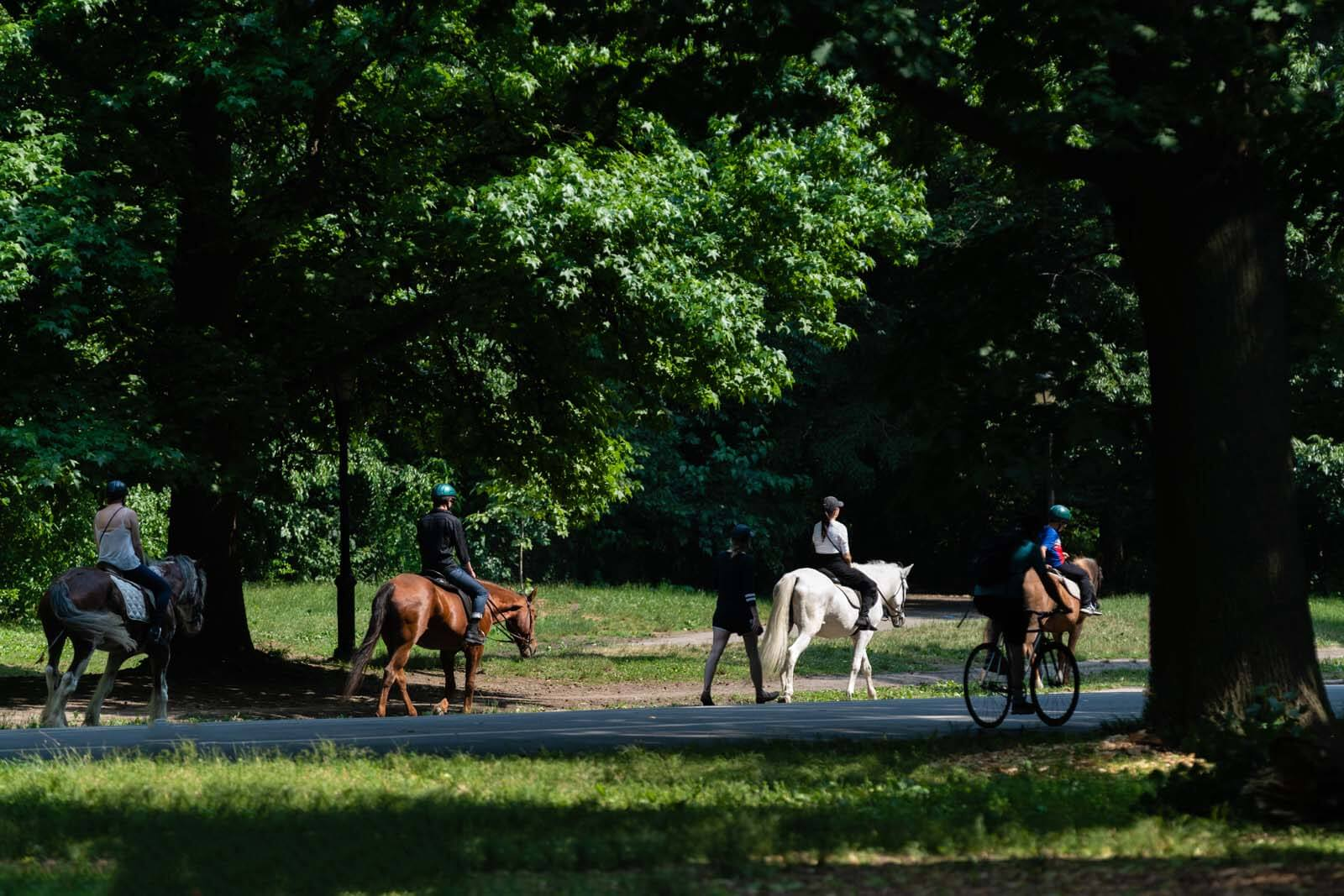 Horseback Riding in Prospect Park in Brooklyn