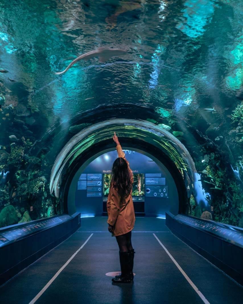 Shark tunnel at New York Aquarium at Coney Island Brooklyn