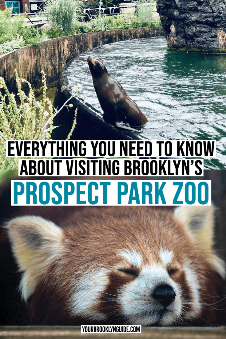 Prospect Park Zoo Tips