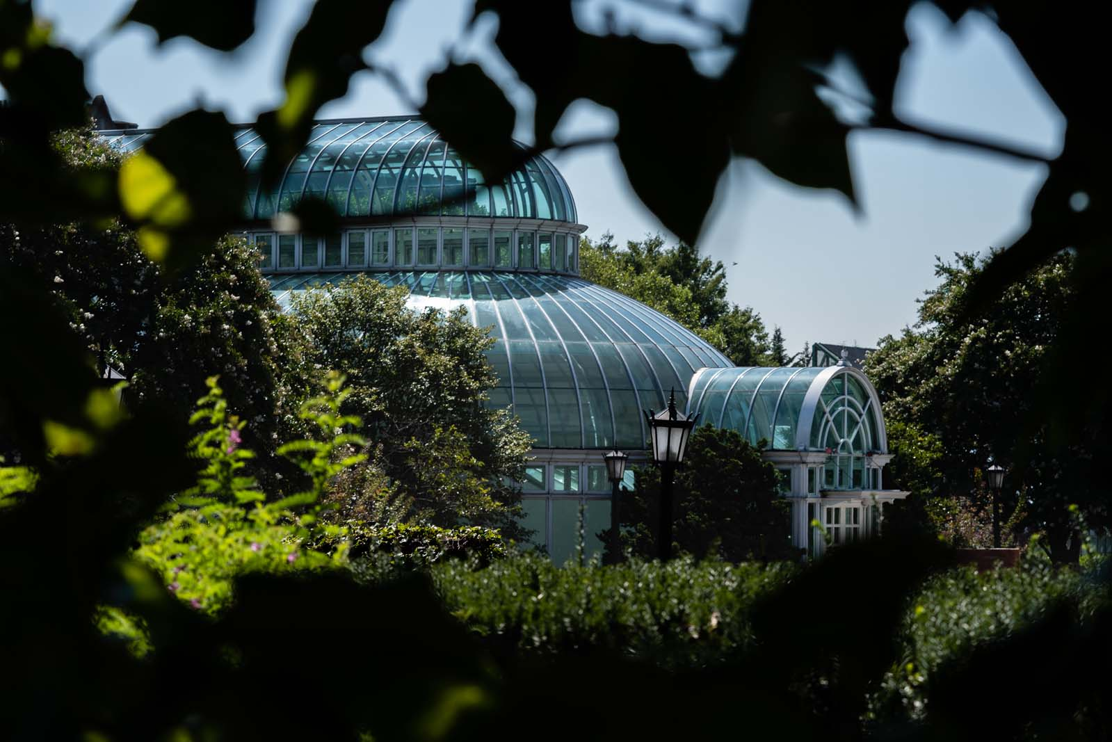 The conservatory at the Brooklyn Botanic Garden