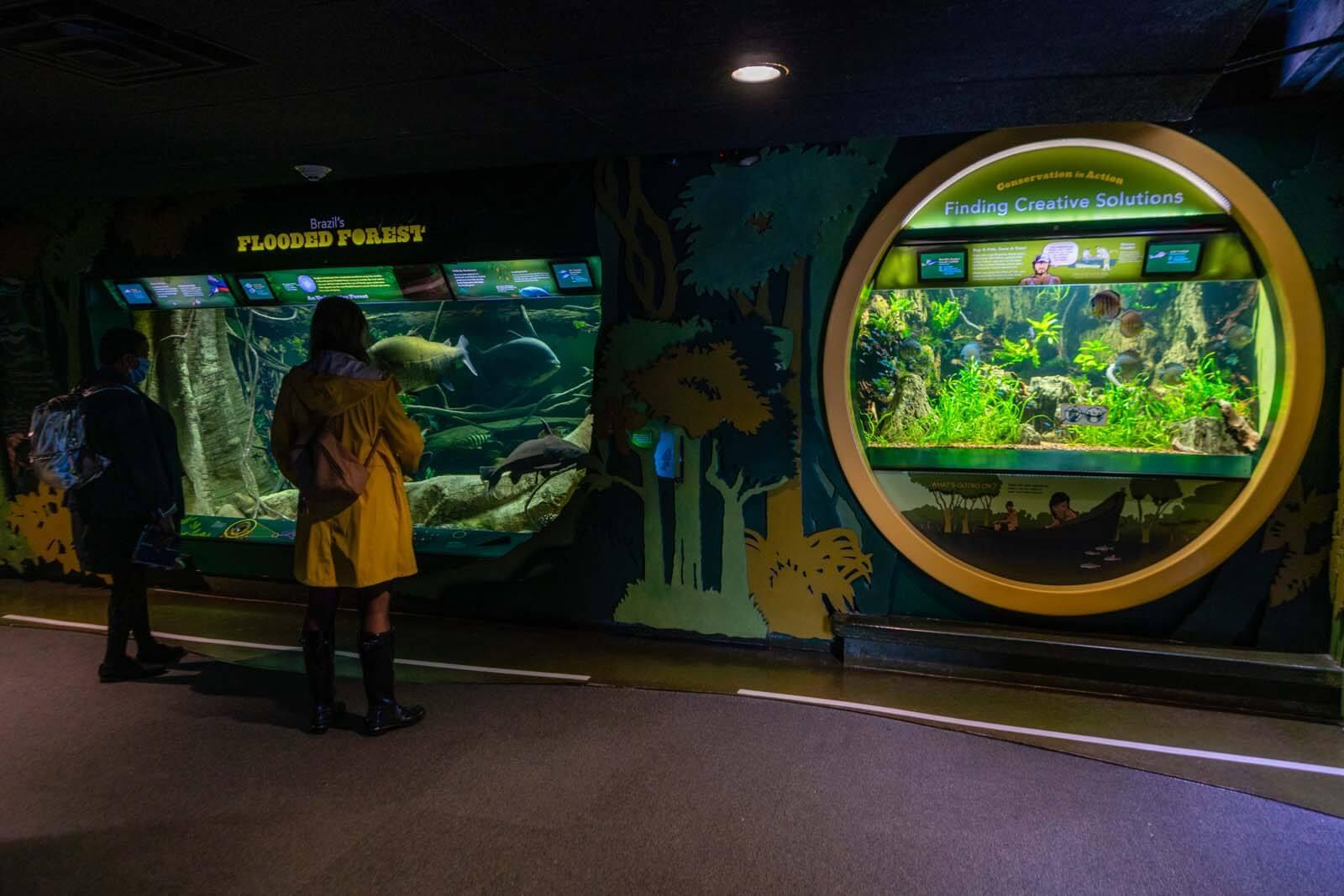 Brazil flooded forest exhibit at Coney Island New York Aquarium