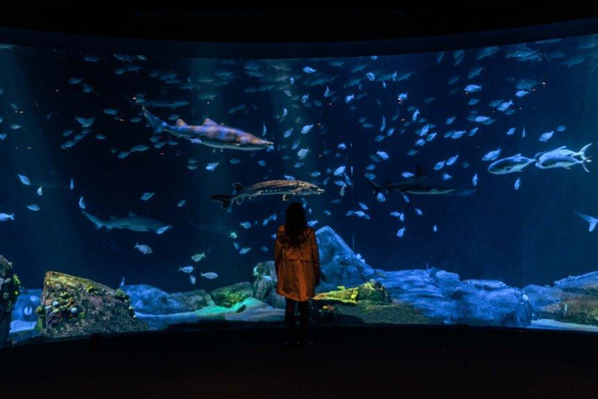 New York Aquarium big tank full of sharks at Coney Island in Brooklyn
