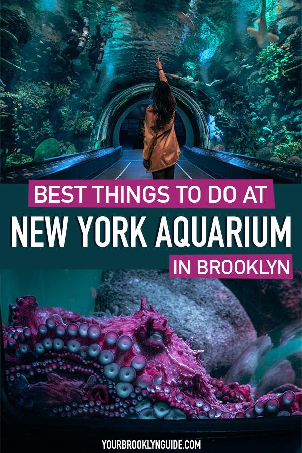 brooklyn-aquarium