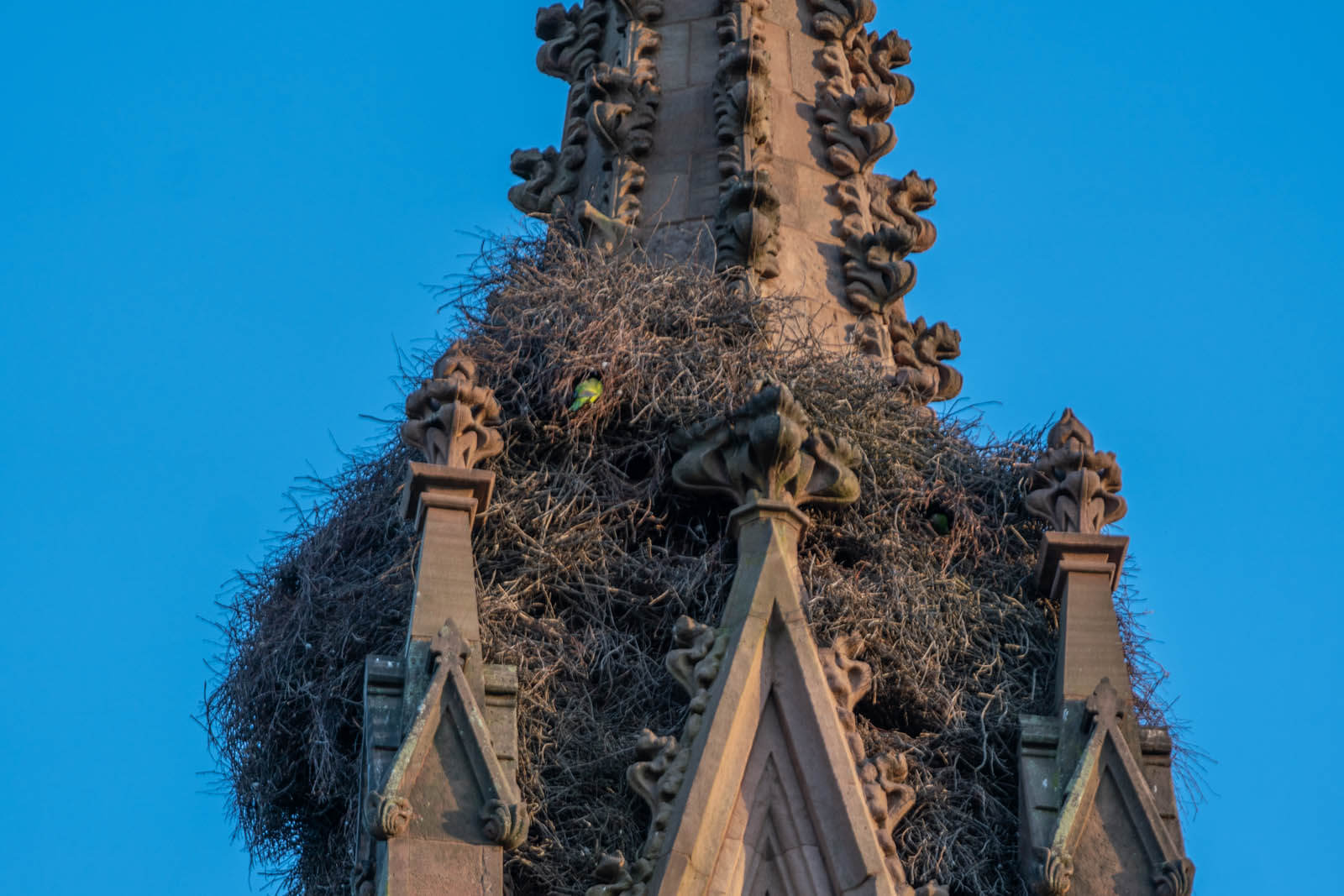 Monk Parakeet nest at the entrance of Green-Wood Cemetery in Brooklyn