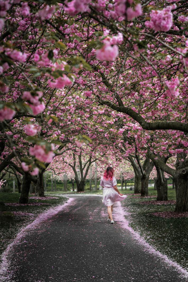 girl walking through cherry blossoms in brooklyn botanic garden
