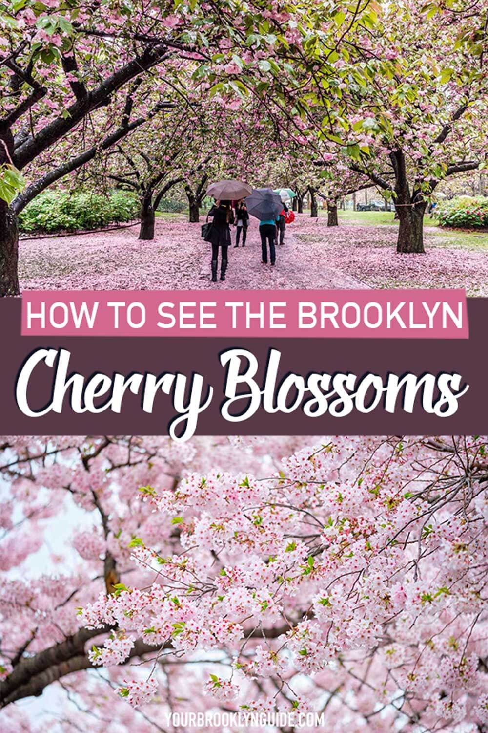 how-to-see-the-brooklyn-cherry-blossoms