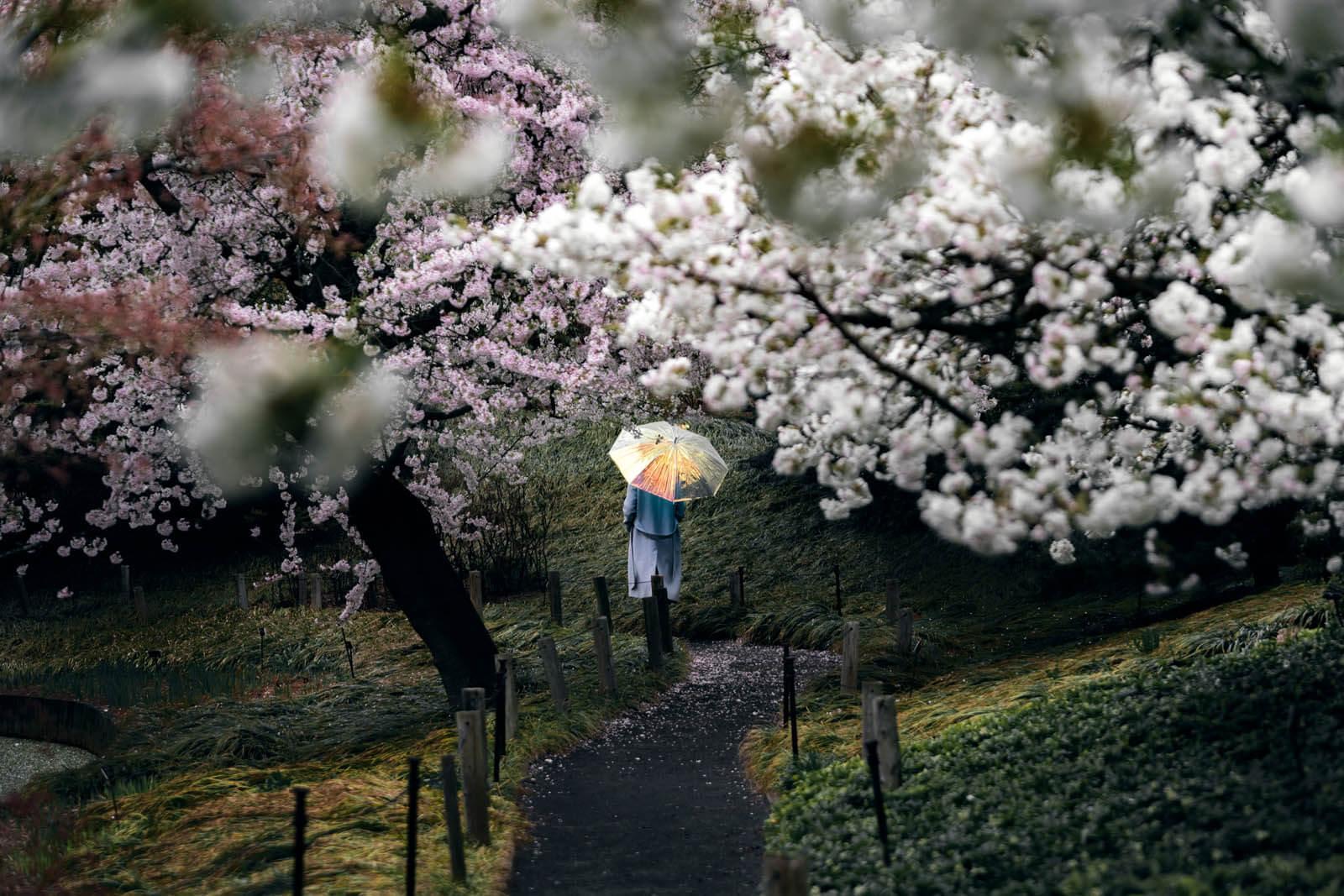 cherry blossoms in Brooklyn Botanic Garden in the spring