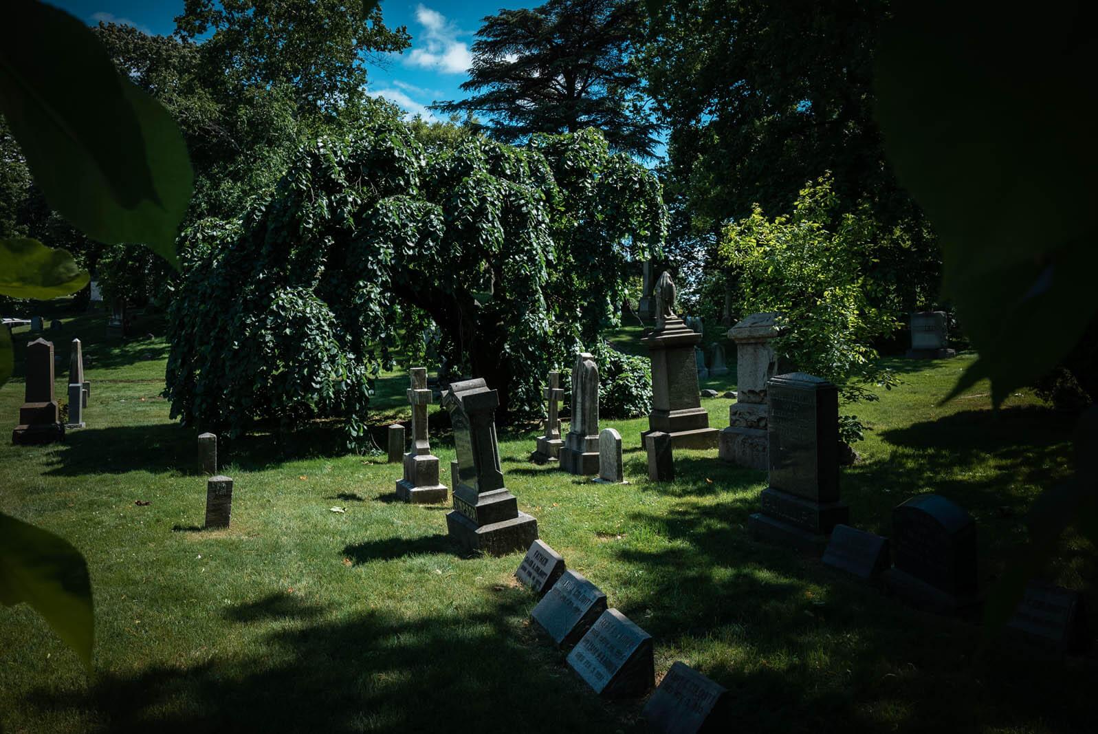 Camperdown Elm at Greenwood Cemetery in Brooklyn