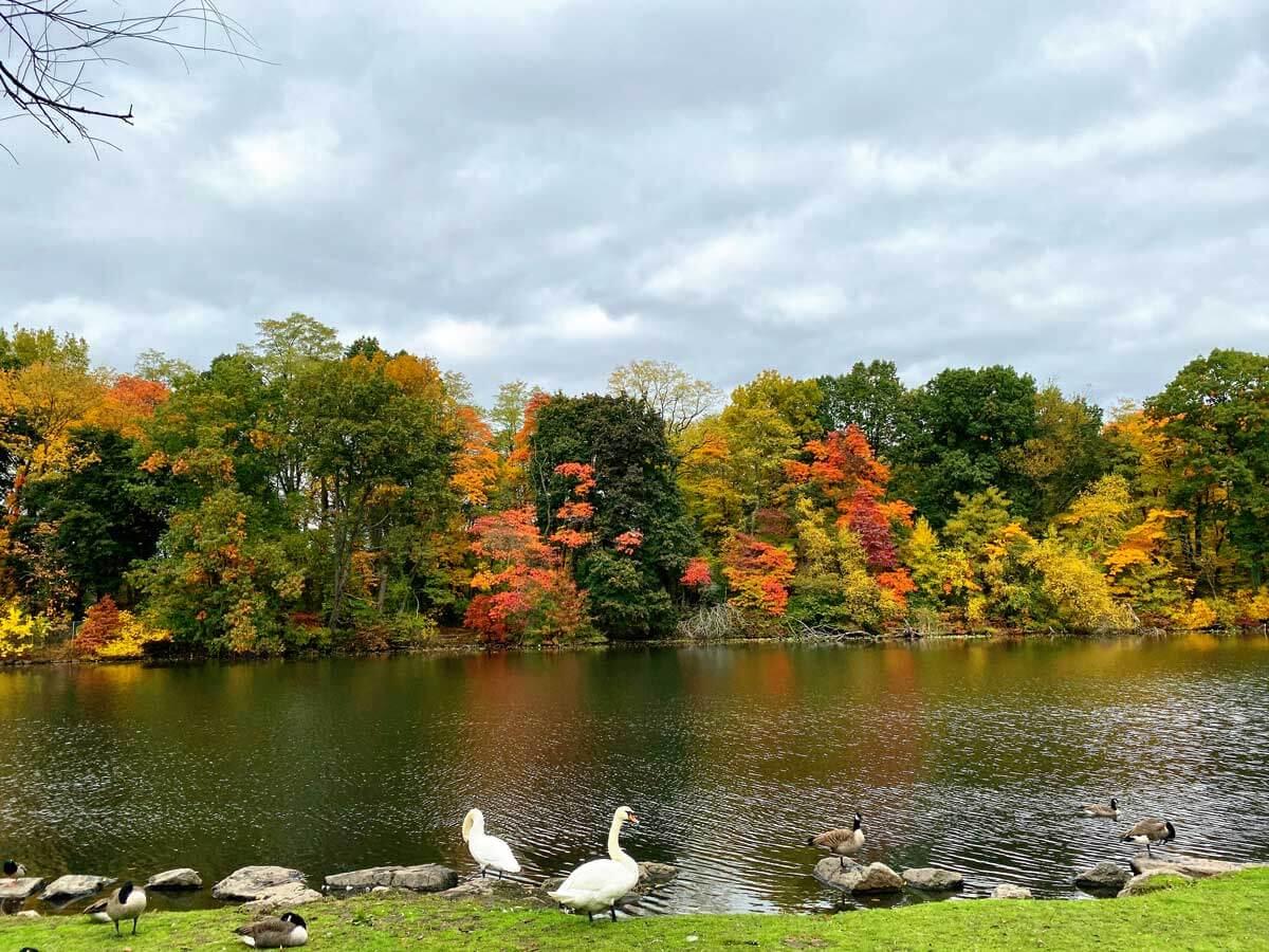 Van-Cortlandt-Park-in-the-Bronx-in-the-fall-in-NYC