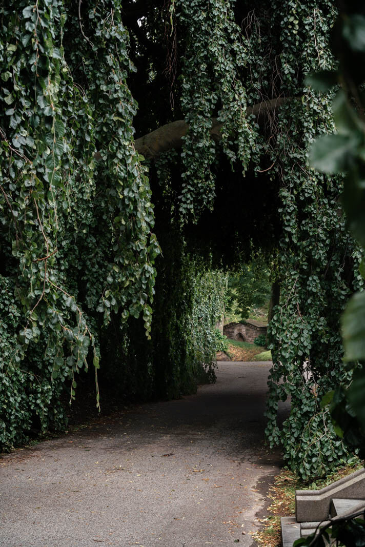 Weeping Willow tree tunnel in Greenwood Cemetery in Brooklyn