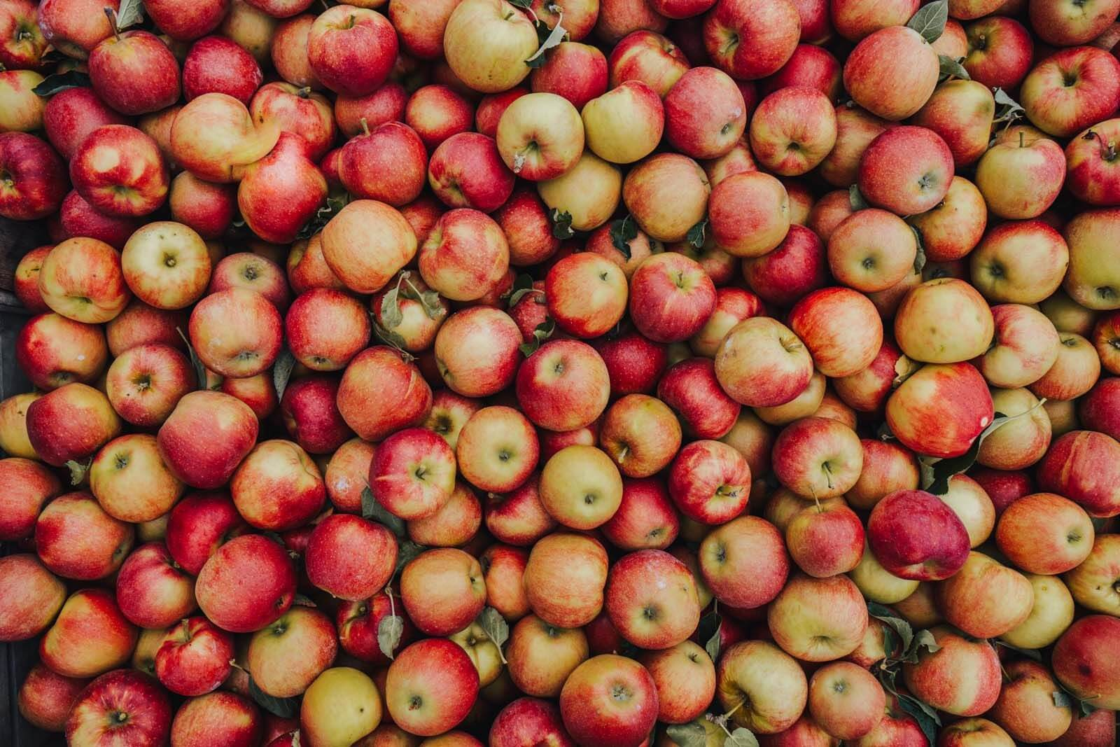 a big bin of apples at an orchard in the fall in new york