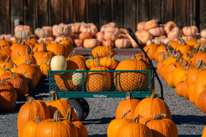 cart full of pumpkins in the fall in new york